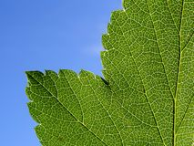 绿色页结构树 免版税库存照片