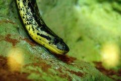 绿色顶头蛇 图库摄影