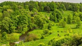 绿色领域和多云天空timelapse 美好的夏天横向 影视素材