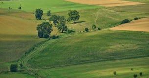绿色领域和树之间的道路 图库摄影