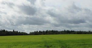 绿色领域和森林风景距离的以及天空与云彩 股票录像
