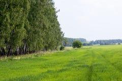 绿色领域和草甸 图库摄影