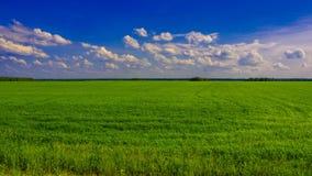 绿色领域在一个晴天 库存图片