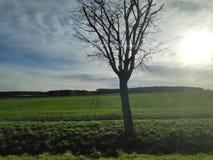 绿色领域在冬天 库存照片