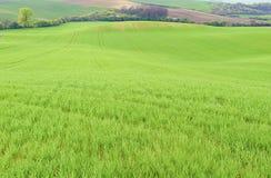 绿色领域在南摩拉维亚,捷克 挥动与绿草的小山,滚动领域 Moravian托斯卡纳 库存照片