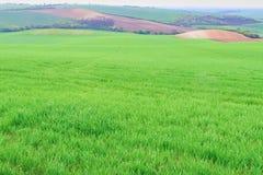 绿色领域在南摩拉维亚,捷克 挥动与绿草的小山,滚动领域 Moravian托斯卡纳 免版税图库摄影