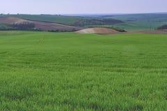 绿色领域在南摩拉维亚,捷克 挥动与绿草的小山,滚动领域 Moravian托斯卡纳 免版税库存照片