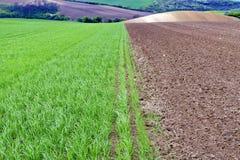 绿色领域在南摩拉维亚,捷克 挥动与绿草的小山,滚动领域 Moravian托斯卡纳 图库摄影