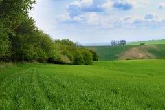 绿色领域在南摩拉维亚,捷克 挥动与绿草的小山,滚动领域 Moravian托斯卡纳 免版税库存图片
