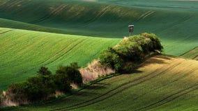 绿色领域在晚上在南摩拉维亚,捷克 挥动与绿草的小山,滚动领域 美丽的秋天土地 免版税库存图片