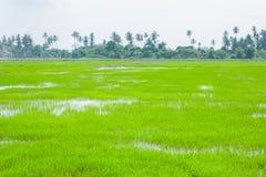 绿色领域在Pulau槟榔河 免版税图库摄影