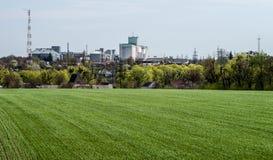 绿色领域用在农业的和工业的复合体的全景的前年轻新芽 免版税库存图片