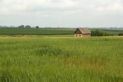 绿色领域的偏僻的小屋 免版税图库摄影
