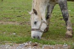 绿色领域的马牧场地在农场 免版税库存照片