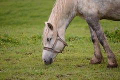 绿色领域的马牧场地在农场 库存图片