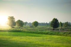 绿色领域看法与太阳火光的在泰国的乡下 免版税库存图片