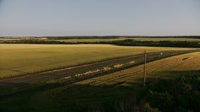 绿色领域顶视图空中射击与草和树的 五谷领域和木空中射击 股票录像