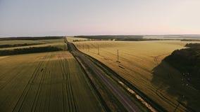 绿色领域顶视图空中射击与草和树的 五谷领域和木空中射击 股票视频