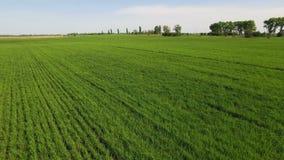 绿色领域风景天线 在背景天空蔚蓝的农业领域 股票录像