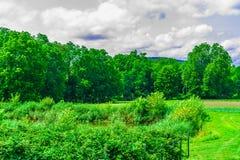 绿色领域,草甸风景有草的纽约上州 免版税图库摄影