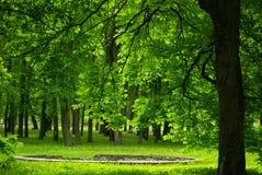 绿色风景在Kadrioru公园 免版税库存照片