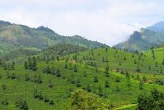 绿色风景在Munnar,伊杜克克镇,喀拉拉,印度-与山和茶园的自然本底 免版税库存照片