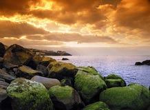 绿色马德拉岛海草 免版税图库摄影