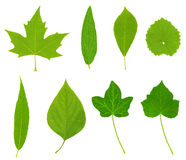 绿色高叶子解决方法 图库摄影
