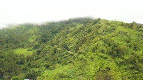 绿色高地报道了热带森林和弯曲道路空中风景 在雨林的寄生虫视图热带小山和 股票视频