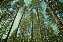 绿色高大的树木 免版税库存照片