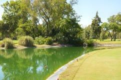 绿色高尔夫球湖 免版税库存图片