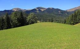 绿色高山草甸-山横向 免版税库存照片