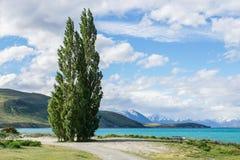 绿色高杉木在深刻的蓝色湖边 库存图片