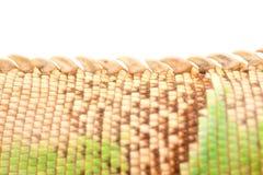 绿色鬣鳞蜥尾标 库存照片