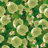 绿色鹅莓的背景 库存照片