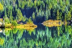 绿色黄色抽象背景Gold湖Snoqualme通行证Washin 免版税库存图片