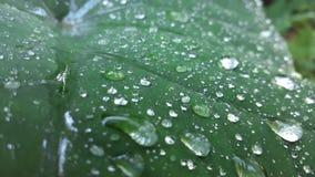 绿色,与透明下落?可能这是雨? 免版税库存图片