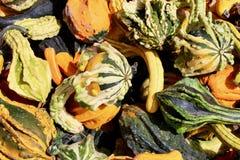 绿色,黄色和橙色秋天金瓜背景 图库摄影