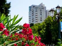 绿色 域公共 背景接近的黑暗的花兰花 免版税库存照片