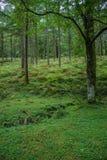 绿色&密集的巴斯克森林春天 库存图片