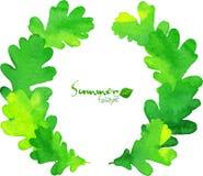 绿色水彩橡木留下传染媒介花圈 库存图片