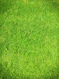 绿色 库存图片