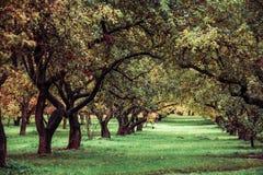 绿色autamn树在公园在10月 葡萄酒颜色 棒图象夫人减速火箭的抽烟的样式 免版税库存图片