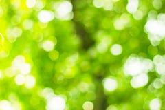绿色bokeh自然 免版税库存图片