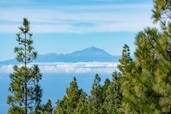 绿色Canarian松树和山在大加那利岛海岛,在登上泰德峰,特内里费岛,金丝雀,西班牙的看法上环境美化 免版税库存图片