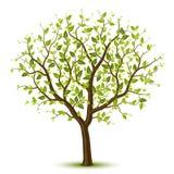 绿色leafage结构树 免版税库存图片