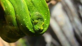 绿色Python移动 股票视频