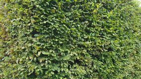 绿色qickset公园 图库摄影