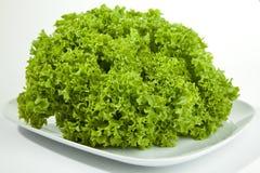 绿色salat 免版税图库摄影