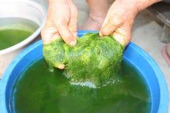 绿色spirogyra是淡水海藻有非常高钙,并且β -胡萝卜素,使用为烹调,这是普遍的在北部和 图库摄影